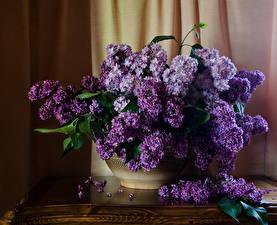 Обои Букеты Сирень Лепестки Цветы