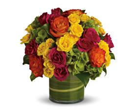 Фото Букеты Розы Белый задний план Ваза Цветы