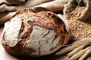 Фотография Хлеб Крупным планом Пшеница Колос Зерно Пища