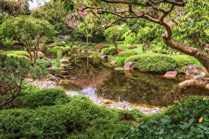 Картинки Брисбен Австралия Парки Пруд Кусты Ветвь Природа