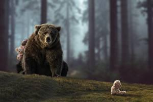 Обои Медведи Гризли Животные