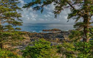 Картинка Канада Берег Море Ель Ucluelet British Columbia