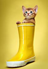 Фотографии Коты Цветной фон Котята Сапоги Смотрит Желтый Животные
