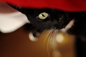 Обои Кошки Глаза Взгляд Усы Вибриссы Животные картинки