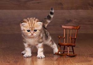 Обои Кошки Котята Кресло Животные