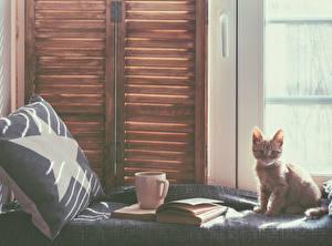 Картинка Кошки Котята Взгляд Окно Чашка Книга Животные