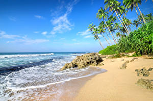 Фотография Берег Море Тропический Небо Пальма Пляж Природа