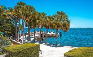Картинка Побережье Штаты Майами Флорида Пальм Кустов Природа