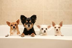 Обои Собаки Ванная Забавные Животные