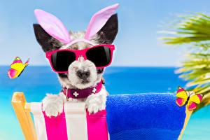 Фотографии Собаки Бабочки Джек-рассел-терьер Очки Ушки кролика Забавные