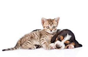 Обои Собаки Кошки Белый фон 2 Котят Бассет хаунд Щенок Спит Животные