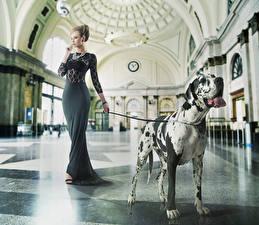 Картинка Собака Платье Немецкий дог Люксовые молодые женщины Животные