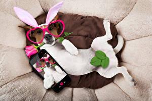 Картинка Собаки Розы Джек-рассел-терьер Очки Смартфон Листья Забавные Ушки кролика