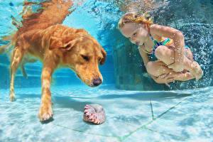 Картинки Собаки Ракушки Вода Подводный мир Плавательный бассейн Девочки Ребёнок Животные