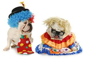 Картинки Собаки Белый фон Вдвоем Бульдог Униформа Очки Шляпа Галстук Смешные