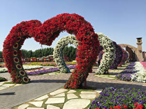 Картинка Дубай ОАЭ Петунья Сады Дизайн Miracle Garden Природа