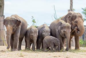 Обои Слоны Детеныши