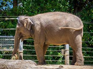Картинка Слоны Сбоку Животные