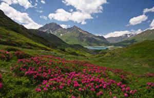 Картинка Франция Пейзаж Рододендрон Гора Холмов Облако Savoie Природа