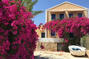 Картинка Греция Здания Бугенвиллия Лодки Кусты Kastelorizo