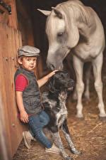 Обои Лошади Собаки Мальчики Смотрит Ребёнок Животные