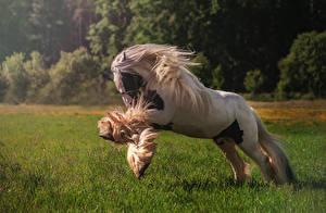 Фотографии Лошади Бег Трава Животные