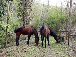 Обои Лошади Две Животные