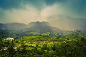 Фотографии Индия Поля Холмы Деревья Туман Muthirapuzha Kerala