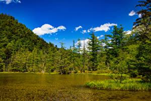 Фотография Япония Озеро Леса Ель Kamikochi Nagano Природа