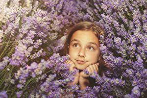 Фото Лаванда Девочки Лицо Взгляд Ребёнок