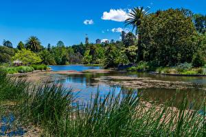 Фотография Мельбурн Австралия Парки Пруд Пальмы Природа