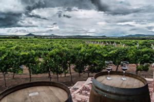 Обои Мексика Поля Вино Бочка Кусты Бокалы Ezequiel Montes Природа