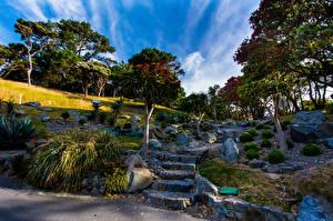 Фотография Новая Зеландия Парки Камень Лестница Деревья Wellington Botanical garden Природа
