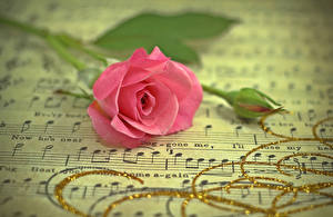 Фотографии Ноты Розы Розовый Бутон Цветы