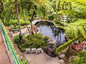 Картинки Португалия Сады Пруд Пальмы Кусты Monte Palace Tropical Garden Funchal Madeira Природа