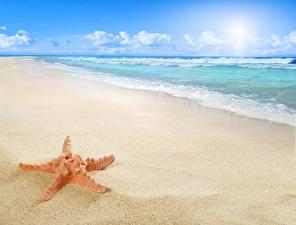 Фотография Море Побережье Морские звезды Пляж