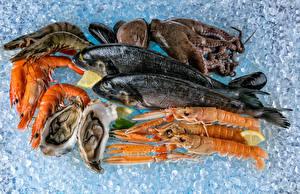 Фотография Морепродукты Рыба Креветки Лед Продукты питания