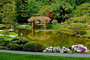 Обои Сиэтл Штаты Сады Пруд Кустов Дерево Japanese Garden Природа