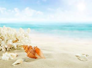 Фотографии Ракушки Пляж Песок Природа