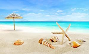 Фотографии Ракушки Море Морские звезды Лето Пляж Песок Природа