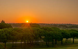 Фотографии Испания Рассветы и закаты Солнце Деревья Rompido Andalusia Природа
