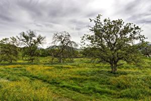Картинка Весенние Деревья Трава Природа