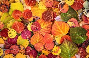 Фото Текстура Крупным планом Осенние Листва Природа