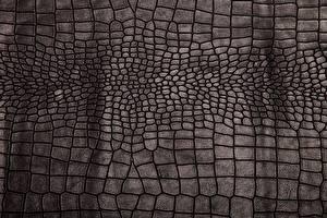 Картинка Текстура Крокодил Кожа материал