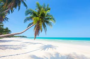 Обои Тропики Пальмы Пляж Природа