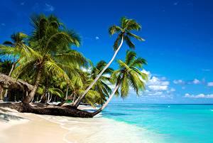 Фото Тропики Море Пальмы Пляж Природа