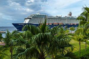 Картинка Тропики Корабли Круизный лайнер Пальмы Curacao, Mein Schiff 5