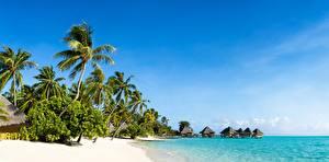 Фотографии Тропики Небо Море Пальмы Пляж Природа