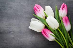 Фотография Тюльпаны Крупным планом Цветы