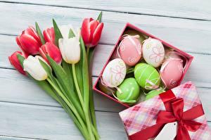 Фотографии Тюльпаны Пасха Яйца Корзина Бантик
